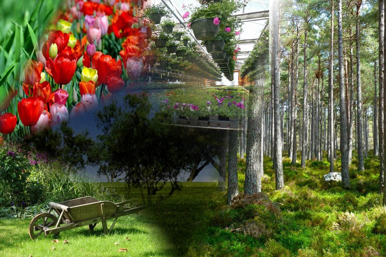 Produzione e vendita piante